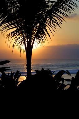 st john palm tree